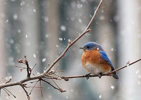 The Pawing Garden Club: Feeding Birds in the Garden